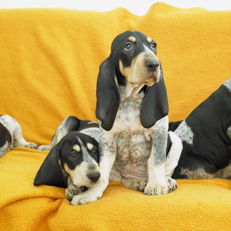 puppies Stock Photo - 8383268