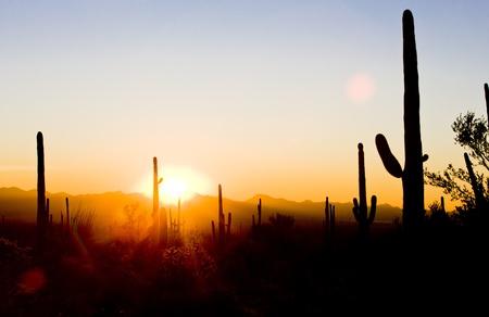 sonoran desert: sunset in Saguaro National Park, Arizona, USA
