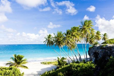 palmtrees: Bottom Bay, Barbados, Caribbean