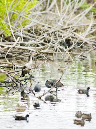 fauna of Everglades National Park, Florida, USA Stock Photo - 8484193