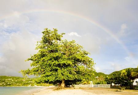rainbow over Grand Anse Bay, Grenada Stock Photo - 8606547