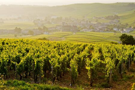 vineyards near Fuisse, Burgundy, France Stock Photo