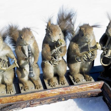 stuffed squirrels band photo