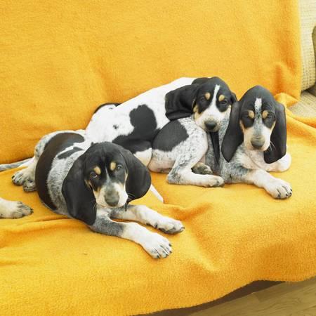 puppies Stock Photo - 8691643