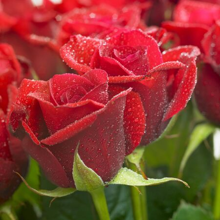 bunches: bunch of red roses