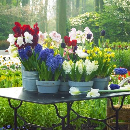 Keukenhof Gardens, Lisse, Netherlands photo