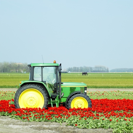 agricultural implements: tractor on the tulip field, Netherlands Stock Photo