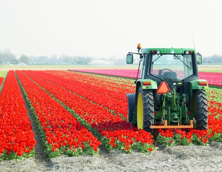 farm implements: tractor on the tulip field, Netherlands Stock Photo
