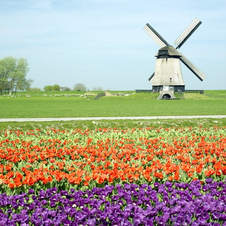 windmill with tulip field near Schermerhorn, Netherlands Stock Photo - 8694208