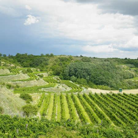 znojmo region: vineyards Stock Photo