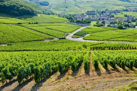 vineyards near Fuisse, Burgundy, France Imagens