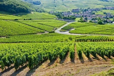 wijngaarden in de buurt van Fuisse, Bourgondië, Frankrijk Stockfoto