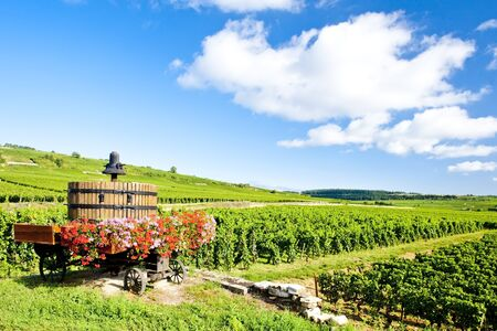 vineyards of Cote de Beaune near Pommard, Burgundy, France Stock Photo