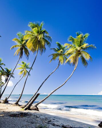 caribbean island: Northern coast of Trinidad, Caribbean Stock Photo