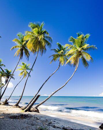 caribbean sea: Northern coast of Trinidad, Caribbean Stock Photo