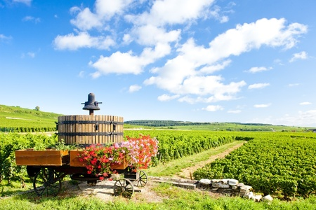 winepress: vineyards of Cote de Beaune near Pommard, Burgundy, France Stock Photo