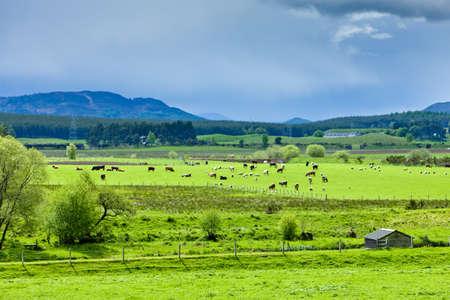 strathspey: landscape of Strathspey Valley, Highlands, Scotland