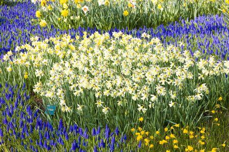 lisse: Keukenhof tuinen, Lisse, Nederland