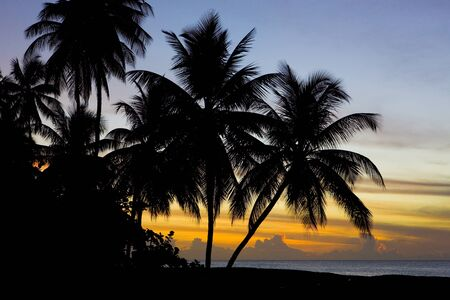 natural vegetation: sunset over Caribbean Sea, Turtle Beach, Tobago Stock Photo