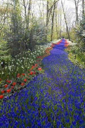 Keukenhof Gardens, Lisse, Netherlands Stock Photo - 9018086