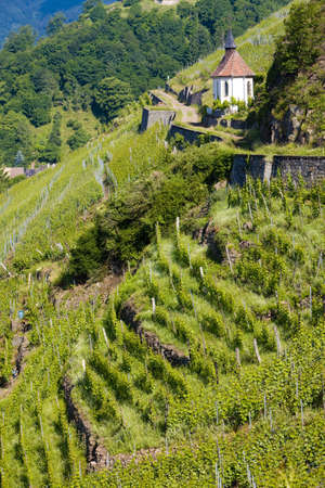 crus: grand cru vineyard and Chapel of St. Urban, Thann, Alsace, France Stock Photo
