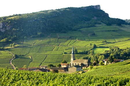 Vergisson with vineyards, Burgundy, France
