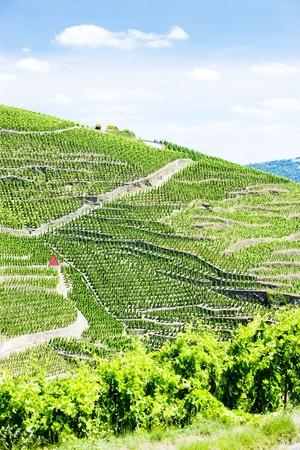 crus: grand cru vineyards, Cote Rotie, Rhone-Alpes, France