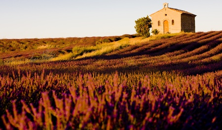 country church: chapel with lavender field, Plateau de Valensole, Provence, France Stock Photo