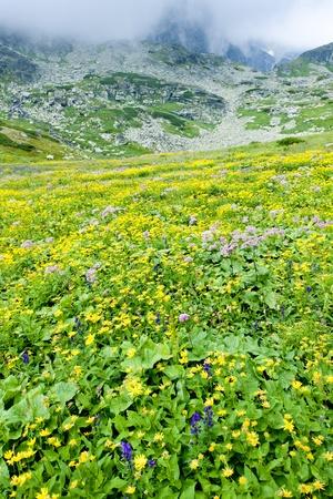 tatras tatry: Kvetnica, Vysoke Tatry (High Tatras), Slovakia