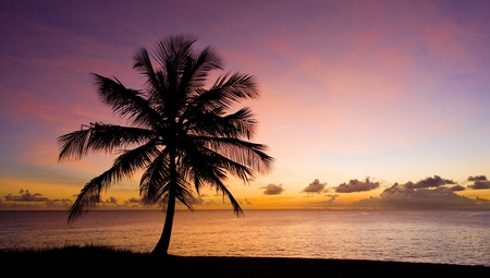 sunset palm trees: sunset over Caribbean Sea, Barbados