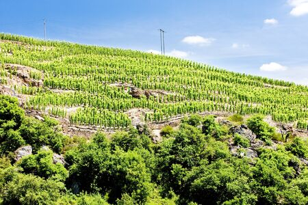 crus: grand cru vineyard, Cote Rotie, Rhone-Alpes, France