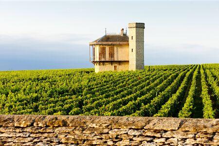 blanc: vineyards of Clos Blanc De Vougeot Castle, Burgundy, France
