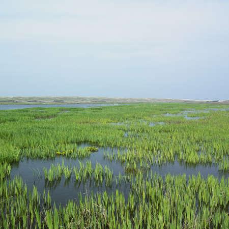 Texel Island, Netherlands Stock Photo - 9744460