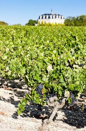 bordeaux region: Vineyard, Bordeaux Region, France Stock Photo