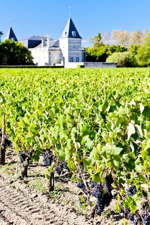 bordeaux region: vineyard and Chateau Tronquoy Lalande, Saint-Estephe, Bordeaux Region, France