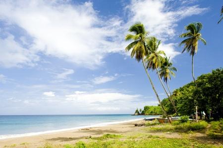 palmtrees: Duquesne Bay, Grenada Stock Photo