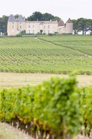 vineyard and Chateau dYquem, Sauternes Region, France photo