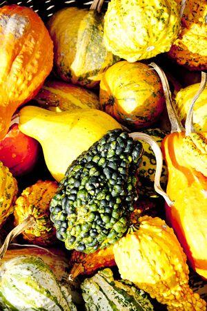 falltime: still life of pumpkins