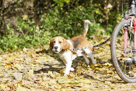dog on leash: perro en la correa del perro