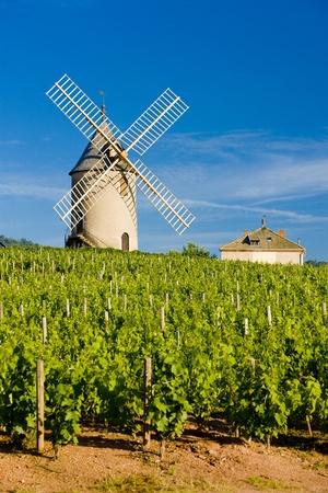 viniculture: vineyards with windmill near Ch�nas, Beaujolais, Burgundy, France