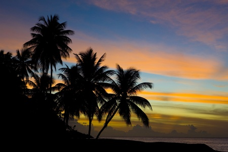 solitary tree: sunset over Caribbean Sea, Turtle Beach, Tobago Stock Photo