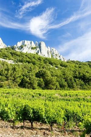 vaucluse: vineyards near Gigondas at Col Du Cayron, Provence, France