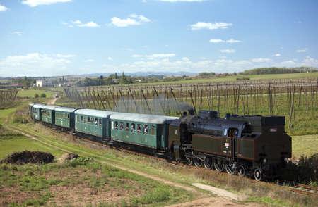 hopgarden: steam train (464.102), Knezeves - Krupa, Czech Republic