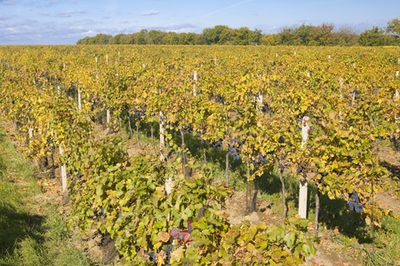 znojmo region: vineyards, Eko Hnizdo, Czech Republic Stock Photo
