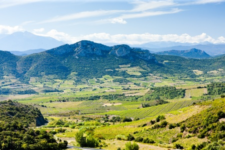 vineyars en Languedoc-Roussillon, France