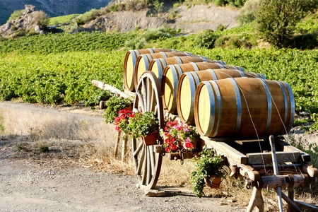 vignoble avec de barils, Villeneuve-les-Corbières, Languedoc-Roussillon, France Banque d'images