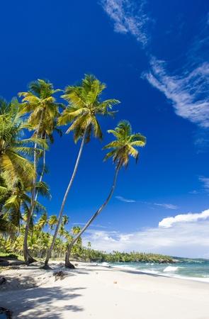 the silence of the world: Cumana Bay, Trinidad
