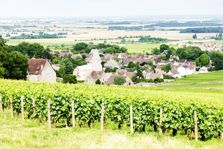 crus: grand cru vineyard near Fixin, Cote de Nuits, Burgundy, France