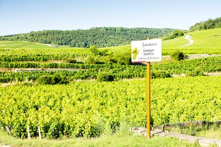 crus: grand cru vineyards of Richebourg, Burgundy, France