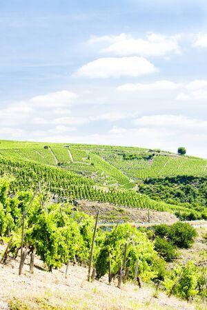 rhone: grand cru vineyards, Cote Rotie, Rhone-Alpes, France
